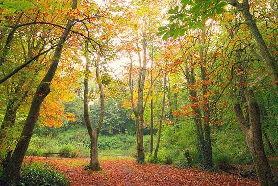 tehidy-woods-cornwall
