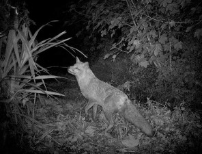 Fox-5-6-12-065