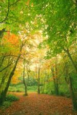 Tehidy Woods 3
