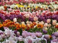 gardens in spring time