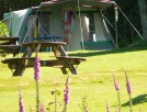 Campsite tent pitch at Tehidy holiday park in Cornwall