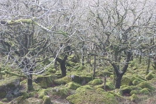 wistman-woods-dartmoor