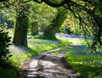 winding paths and bluebells
