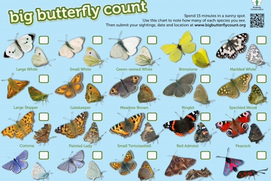 Help the Big Butterfly Count before August 2015