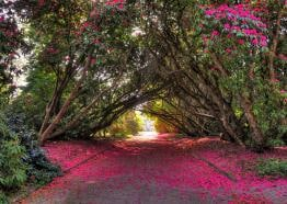 Tregothnan Gardens on the Fal