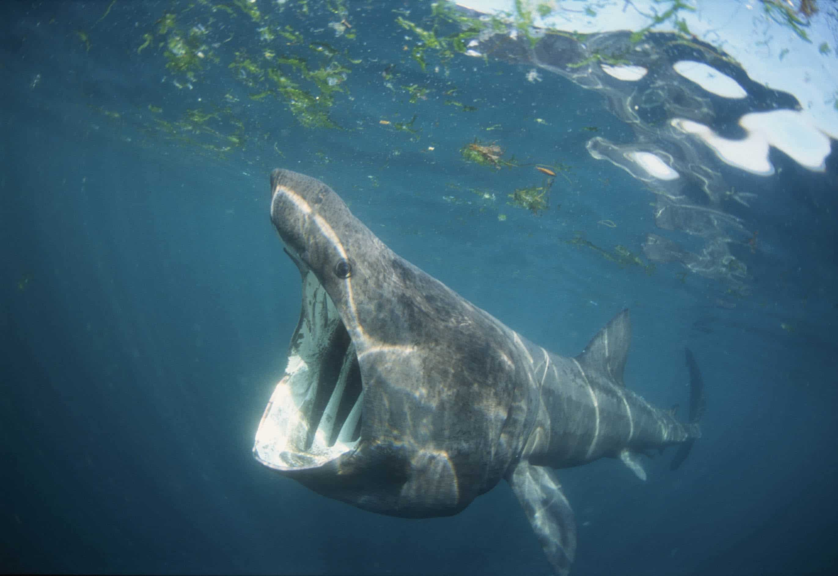 Basking Shark sightings | Tehidy Holiday Park | Tehidy ...