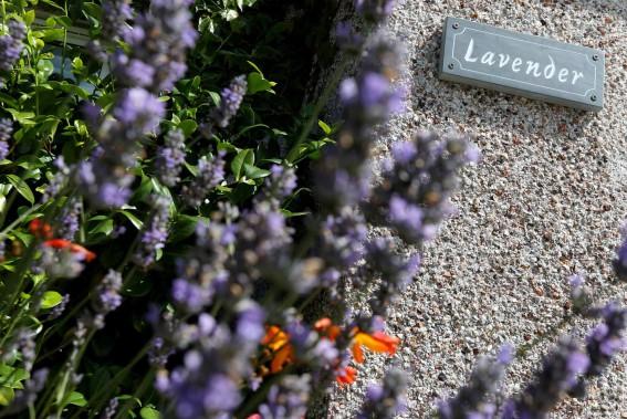 Lavender holiday cottage