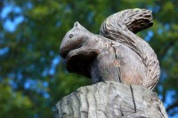 Wooden Squirrel Carving