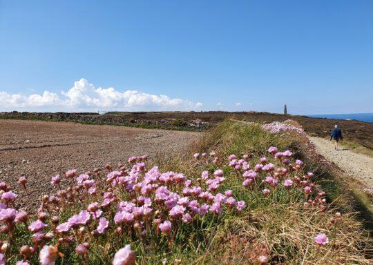 Beautiful flowers on coastal path